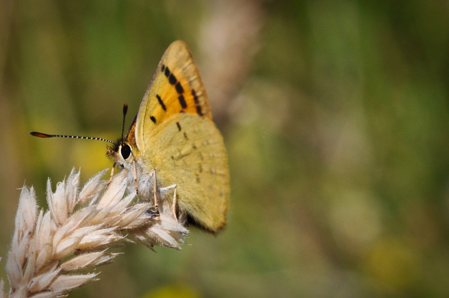 Macro moth Whatipu