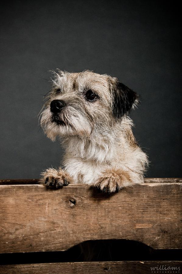 Dog in Studio