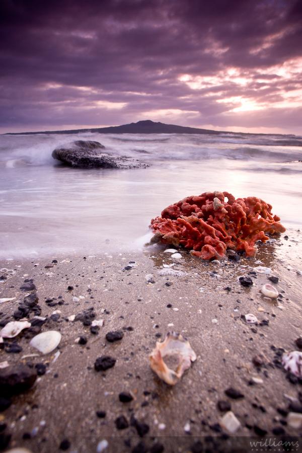 Rangitoto Sunrise North Head