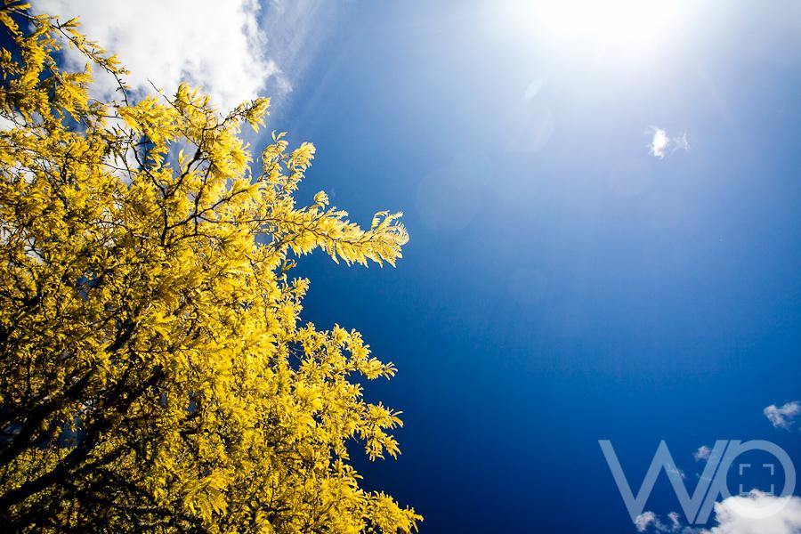 Lush Spring Blooms