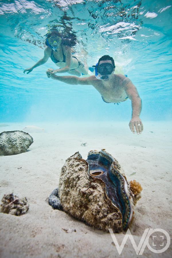 Aitutaki Day Tour Underwater Photos 187 Queenstown Wedding