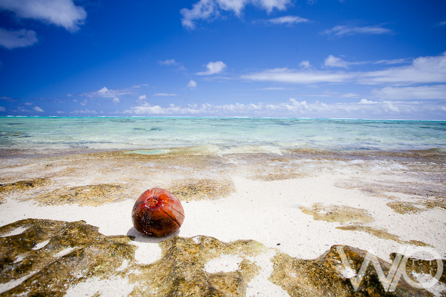 coconut on beach Rarotonga