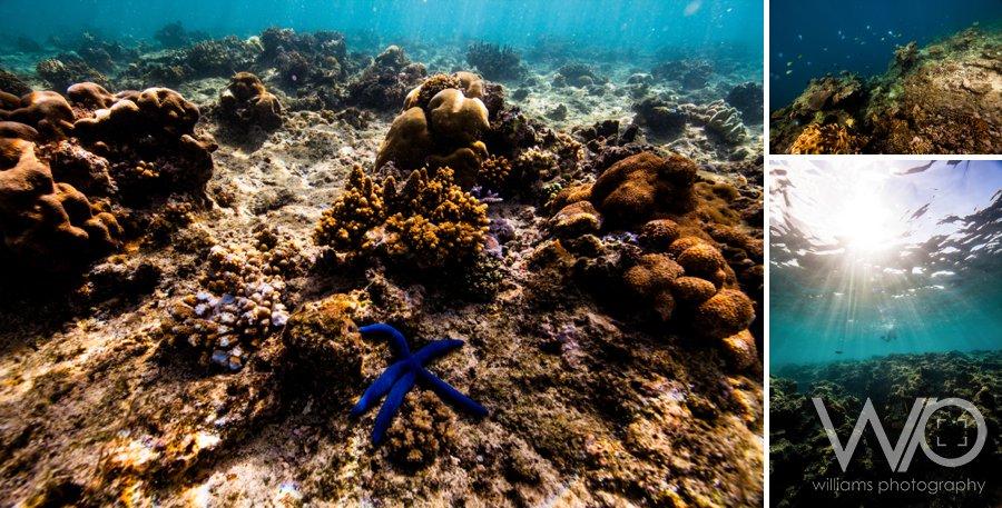 Mana Island Snorkelling
