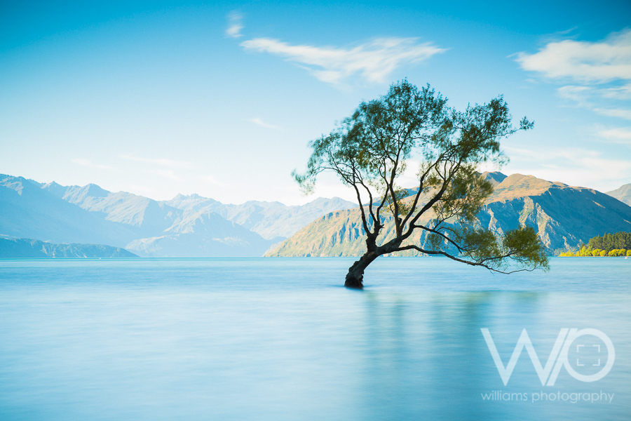 Famous Lake Wanaka Tree