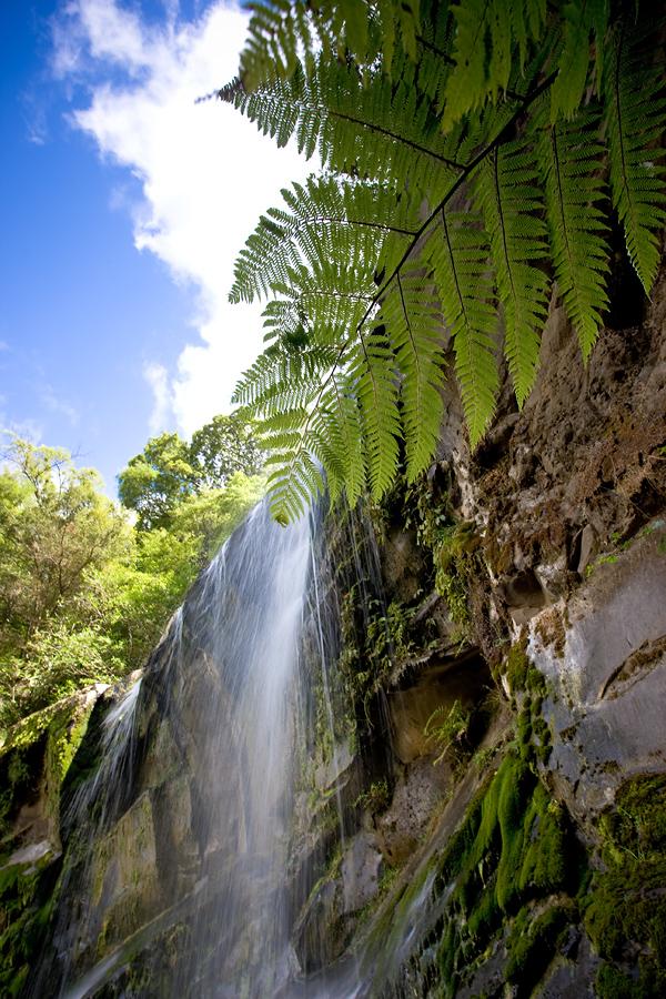 Mokoroa Falls, Waitakere, New Zealand