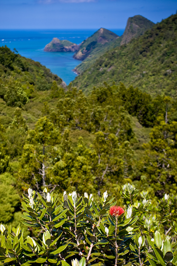 Whatipu View Auckland