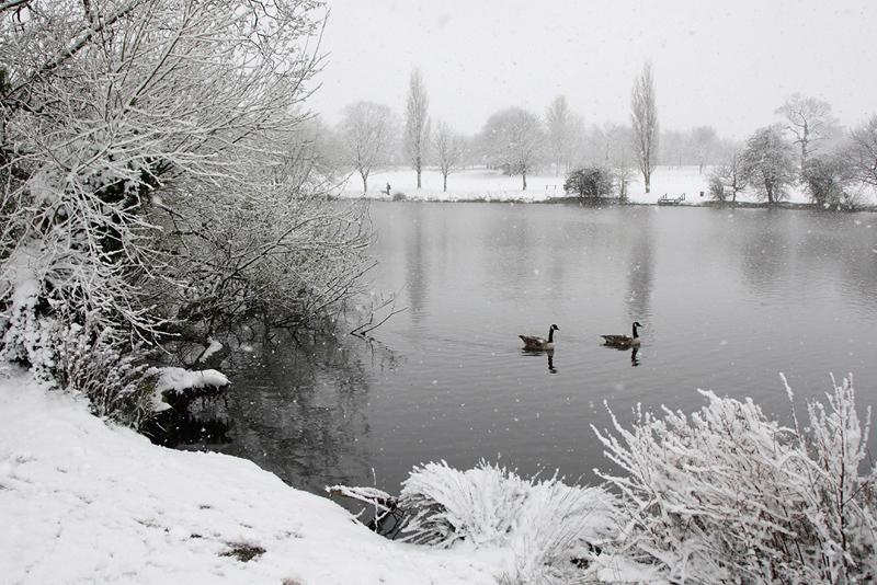 Snow Danson Park