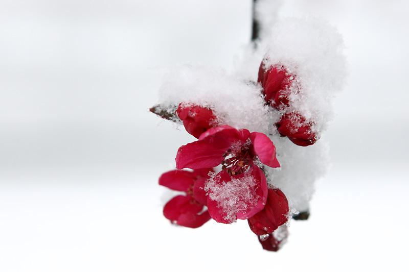 Frozen spring flowers Danson Park