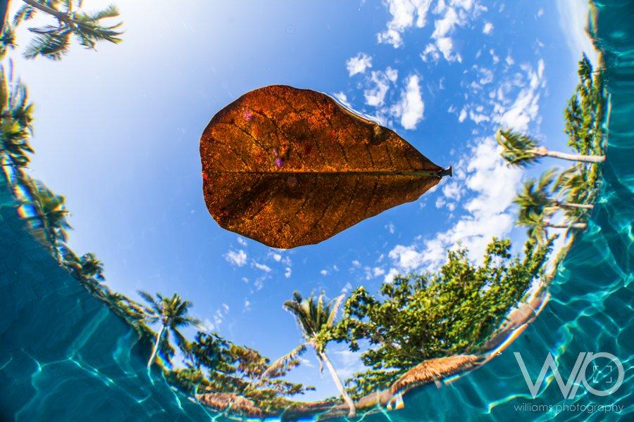 Leaf Underwater photography Fiji