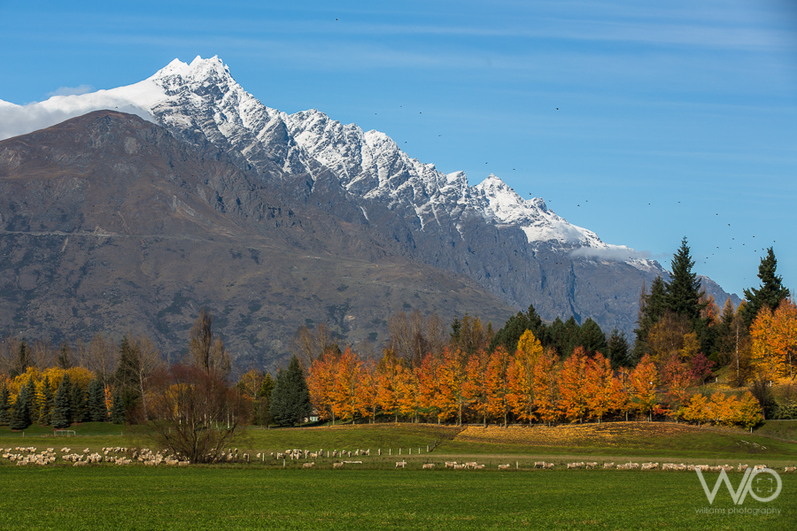 queenstown photography tour-004